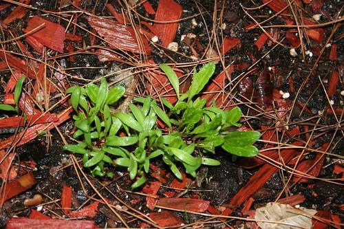 Green bushy stuff