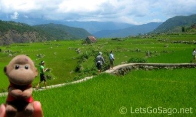 Banga-an Rice Terraces Level Fields with Sago