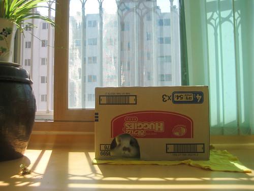 Bunny at Cheonan for Chuseok 2009