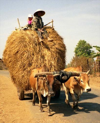 Tác phẩm u201cMùa hoa gạo về trên quê hương tôiu201d Tác giả Nguyễn Quang - farmer resume