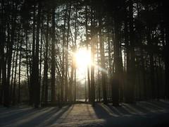 Snowscape2