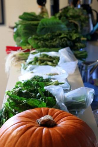 an abundance of CSA produce