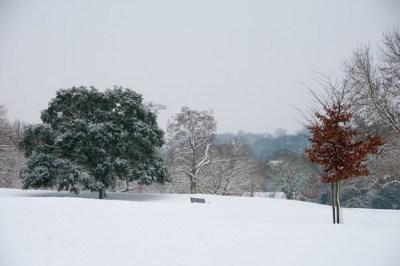 33/365 Winter