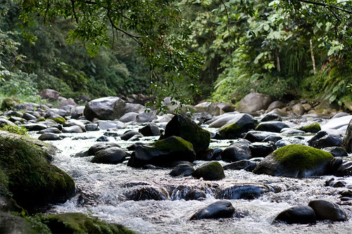 3483492256 a703bf9d74 Gwada Day 3   La rivière Corossol