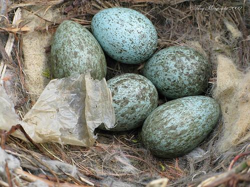 The Crow's Nest.jpg