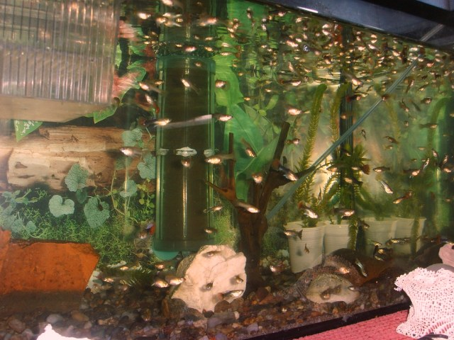 Guppy fish in 5 gallon tank gallon nano tank 2017 fish for How many gallons is my fish tank