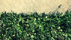 La vegetazione prenderà il sopravvento (Plate #3)