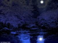 Japanese garden at night | Flickr - Photo Sharing!