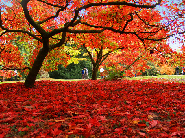 New England Fall Foliage Desktop Wallpaper Autumn Colour At Westonbirt Arboretum Flickr Photo