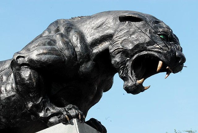 Animal Wallpaper Images Carolina Panthers Statue Carolina Panthers Statue One