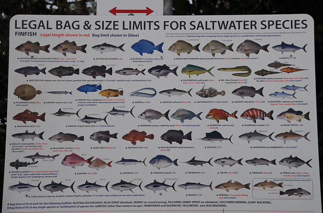 Saltwater fish limits saltwater fish bag size limits for Saltwater fish chart