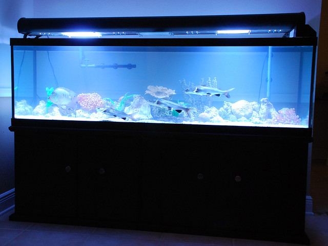 125 gallon Fish Tank | Flickr   Photo Sharing!