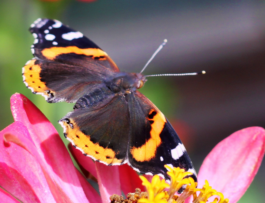 Butterflies butterfly exhibit at brookside gardens