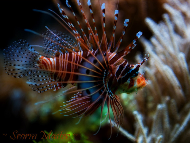 Fish Wallpaper Hd The Spiky Fish Flickr Photo Sharing