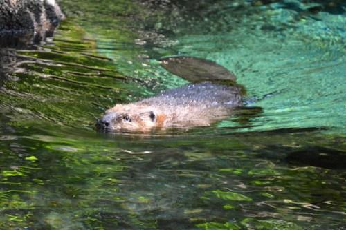 biodome_beaver