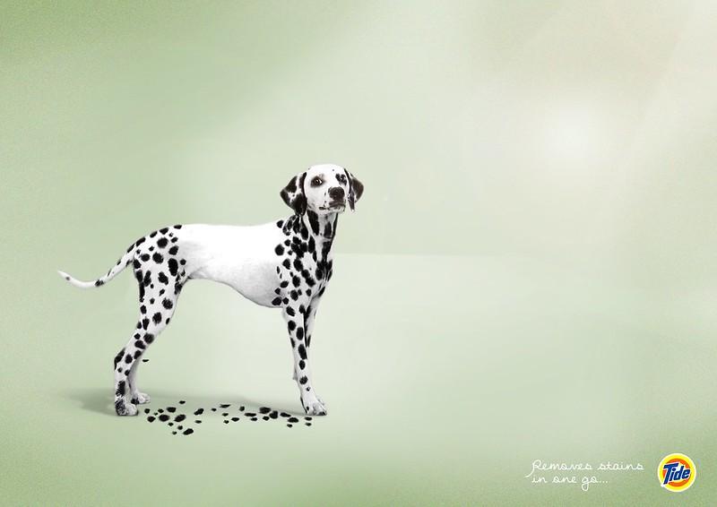 Tide - Dog