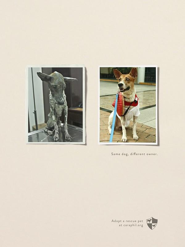 Caraphil - Same Dog Different Owner4