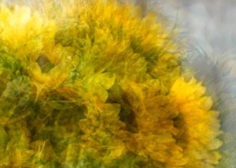 sunflowerdsc2390etal_detail-1.jpg