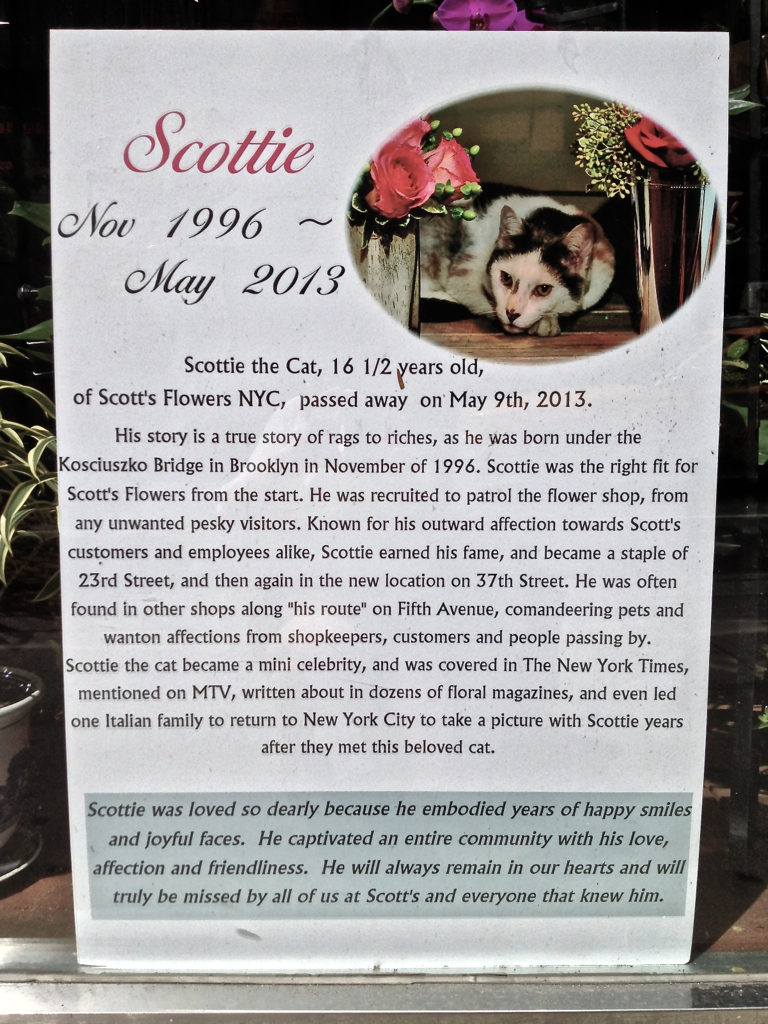 RIP Scottie