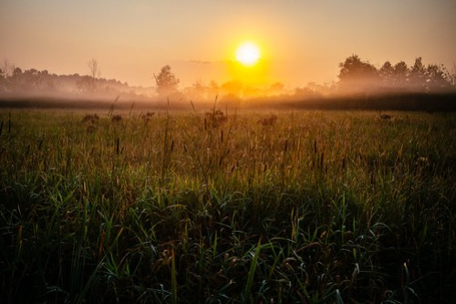 8/20/13 - Foggy Sunrise