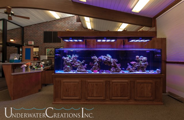 Gallon Aquarium Related Keywords & Suggestions   300 Gallon Aquarium
