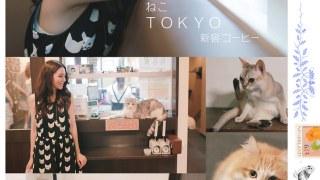 [東京有貓] 新宿歌舞伎町貓咖啡廳。Cat Coffee Calico