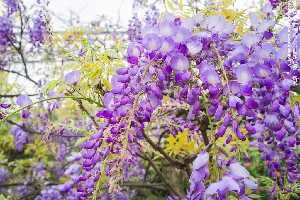 葡萄紫色背景素材