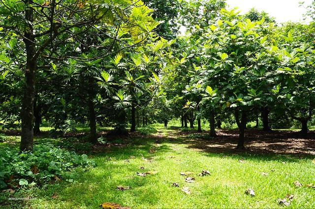 Breadfruit institute