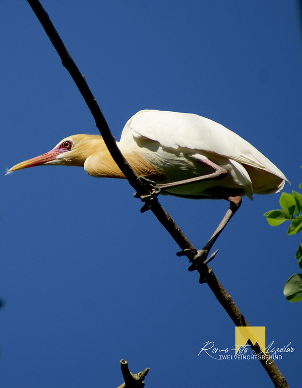 BARAS BIRD SANCTUARY