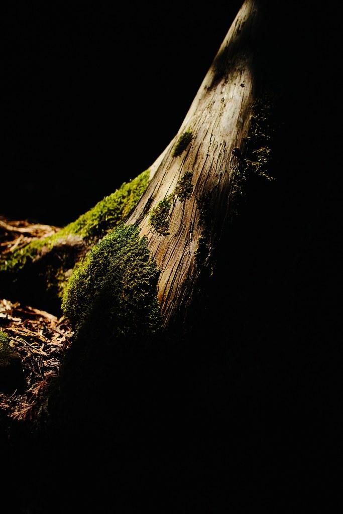 Flowerpot Island: Treebeard