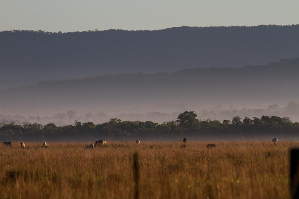 La campiña en los pastizales de Paraguari, con la niebla disipándose minutos después del amanecer. (Tetsu Espósito)