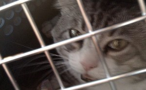 The kitty cat making it back home to louisiana. Sedation starting to wear off