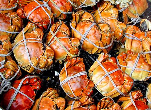 Crabs - ???