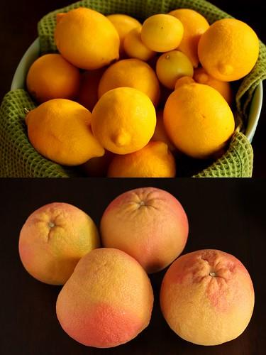 christmas citrus