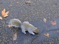 Scoiattolo in Hyde Park Londra