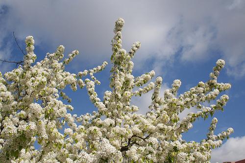 White February in AZ