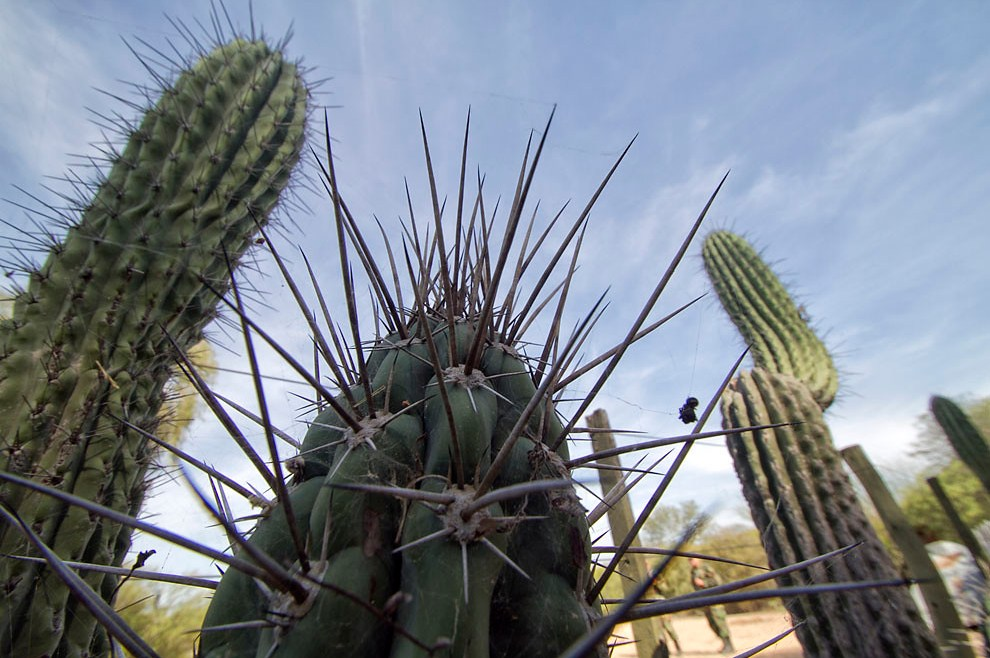 Tunas y cactus son vistos normalmente el paisaje agreste del Chaco. (Tetsu Espósito - Isla Po´i, Chaco, Paraguay)
