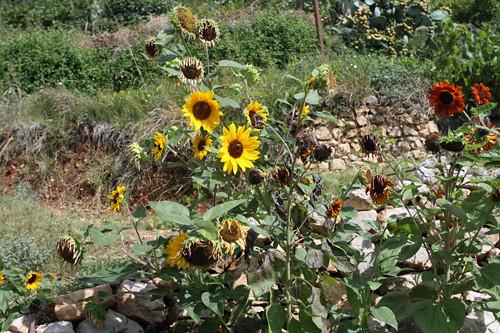 Mirazur garden