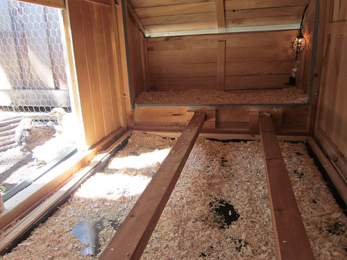 New chicken coop and pen