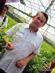 Harvesting a long-stemmed rose