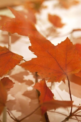 HMNH autumn leaves