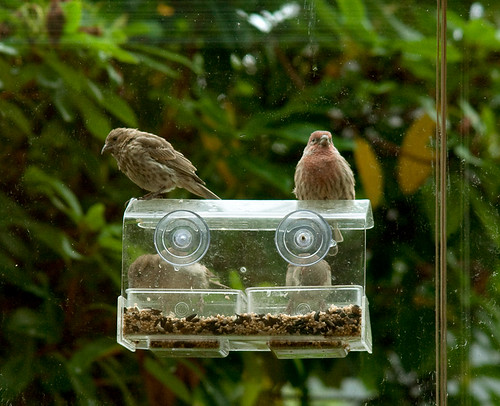 Line up at the bird feeder