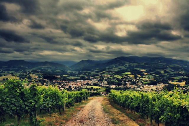 Wine Classification