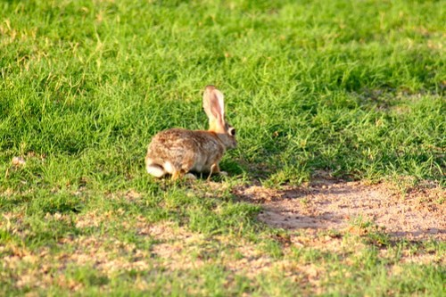 Here little rabbit