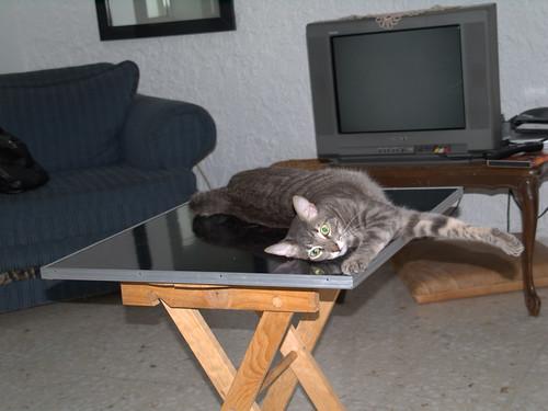 Solovino, Carmina's Cat