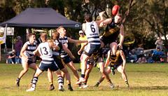 Balmain Tigers v Camden Cats AFL Division1 May 27 2017 00019