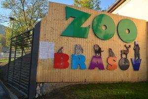 Zebre şi lemuri la Grădina Zoologică Braşov