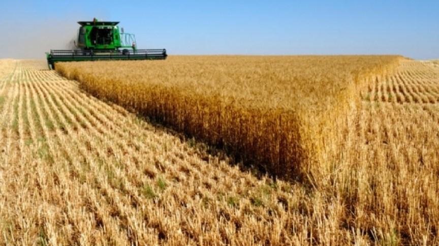 România, principalul exportator de cereale din UE