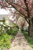 Spring in Strathcona