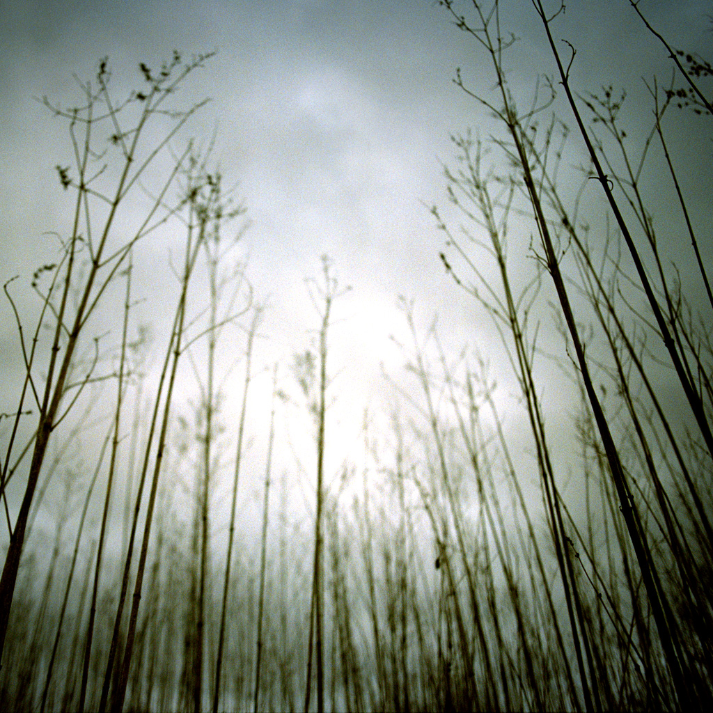 Forest Iphone Wallpaper Nin Quot Ghosts I Iv Quot Ipad Wallpaper Flickr Photo Sharing